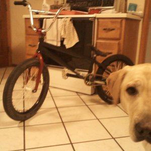 my bike and my dog